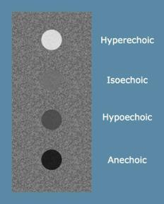 Figure 1. Echogenicity Examples (from Introduction to Bedside Ultrasound)